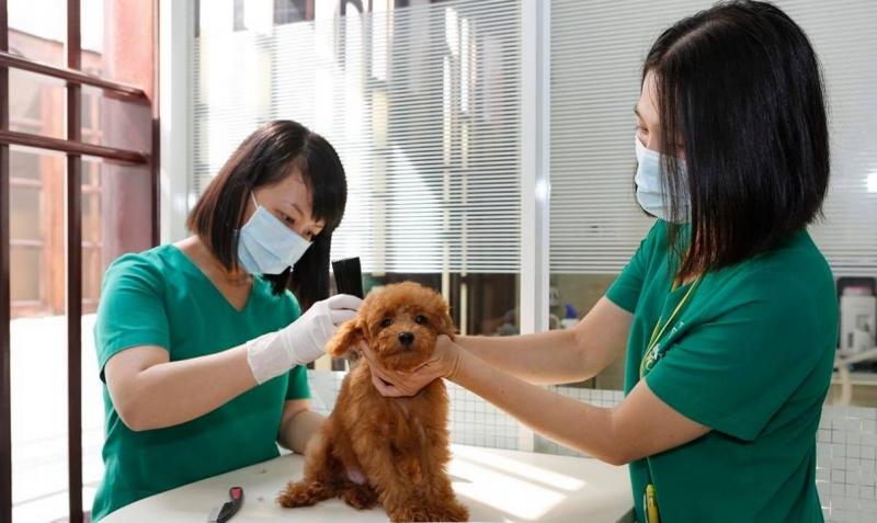 Bệnh viện Petcare An Việt