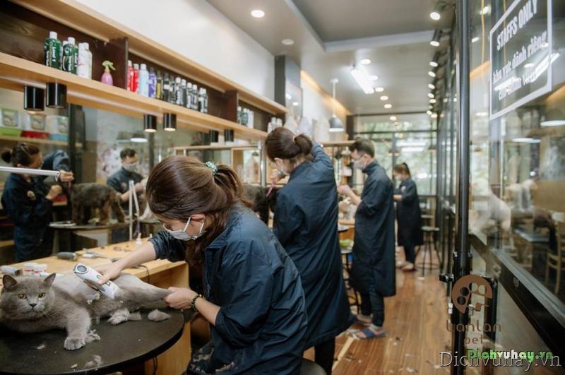 dịch vụ Spa, thú cưng, Spa thú cưng, Hà Nội, cắt tỉa lông thú