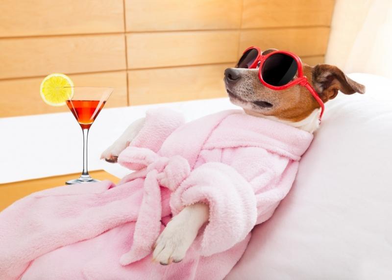 Dịch vụ tắm - massage thư giãn