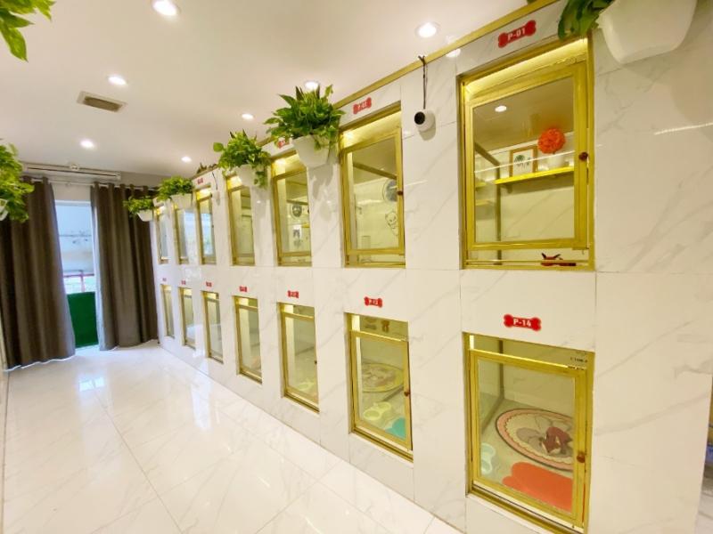 Top 10 dịch vụ spa cho chó ở hà nội uy tín nhất ở Hà Nội